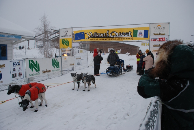 1000 Mile Dog Sled Race